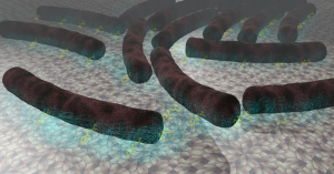 mycobacterium5_iP